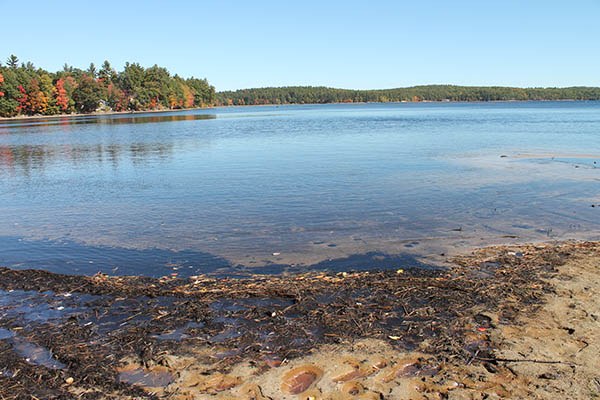 Massabesic levels too low to row
