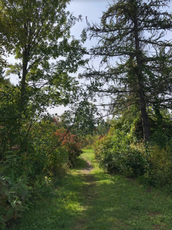 Why not take a stroll through the Adams Pond Trail? Right next to the orchard by Moose Hill, the trail provides a safe space to rest your mind before returning to school. Whether you go alone or with friends, visiting the scenery is sure to reduce stress.